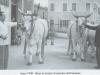 anno-1949-buoi-in-mostra-al-marcato-del-bestiame